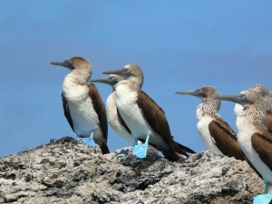 Pikaia_Lodge_Galapagos-29_converted