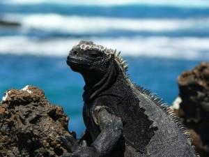 Pikaia_Lodge_Galapagos-30_converted