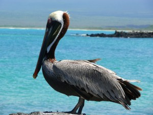 Pikaia_Lodge_Galapagos-31_converted