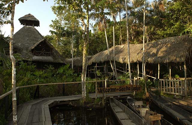 Sacha Lodge Amazon Rain Forest. ECUADOR. South America