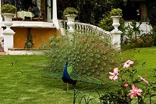 Gardens_5_20130816090645