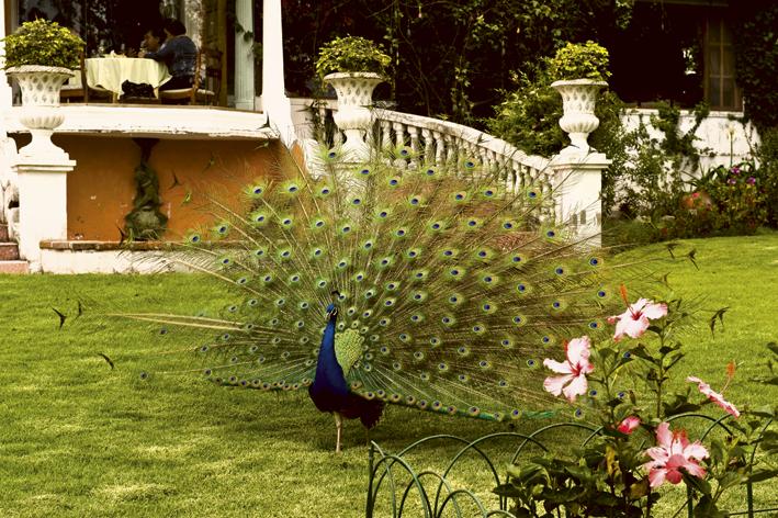 Gardens_5