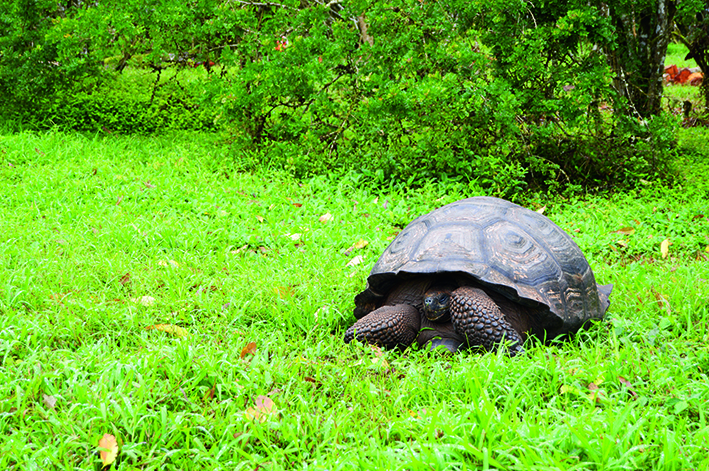 Tortoise ranch_zpsiznpbb7f