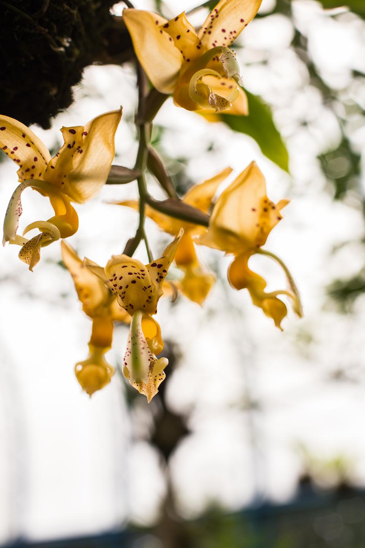 Jardín Botánico - Clave Turismo Ecuador