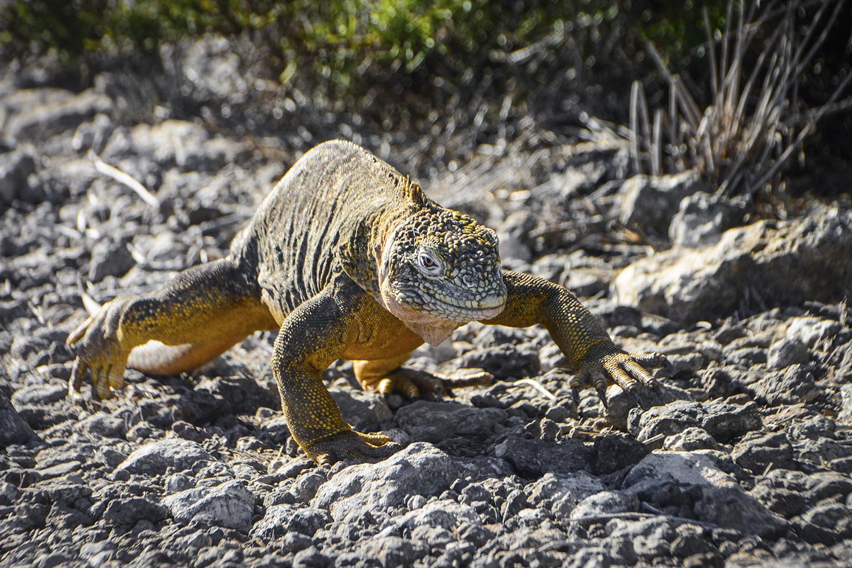 Galapagos - Clave! Turismo