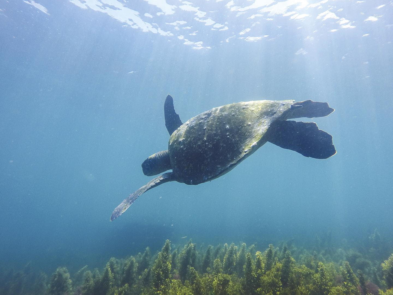 Galápagos sin plástico - Revista CLAVE Turismo Ecuador