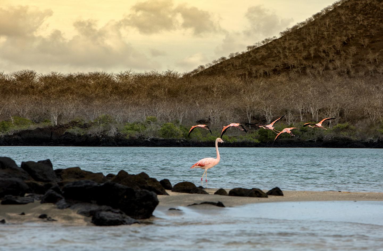 Islas Galápagos - CLAVE Turismo Ecuador